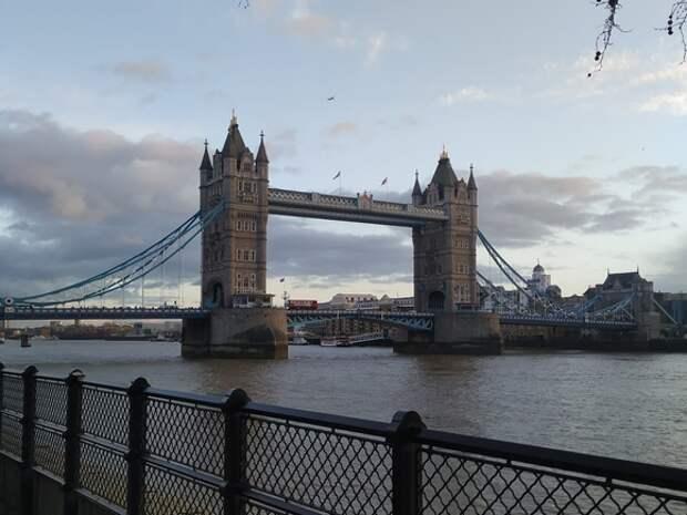 В Лондоне детеныш кита застрял в шлюзе на Темзе