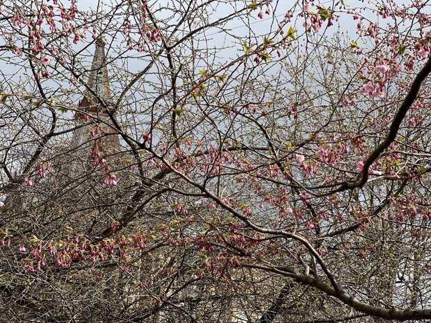 Чем заняться в Петербурге во вторые майские? Фейерверк, прогулки к сакуре, фонтаны и новые места