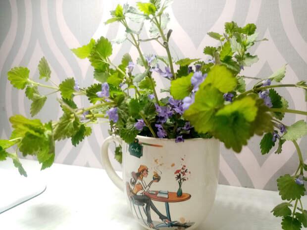 Время собирать ... цветы.