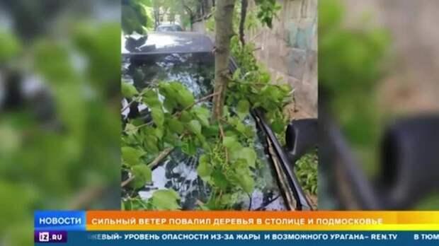 Сильный ветер повалил деревья в Москве