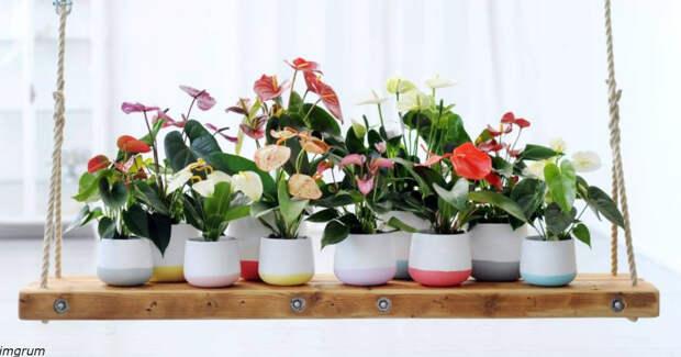 9 комнатных растений для новичков и тех, кто уничтожает все, к чему прикасается