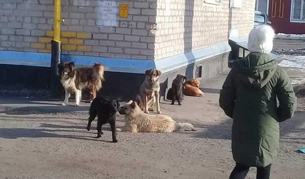 Следком региона нерекомендует оренбуржцам прикармливать бездомных собак