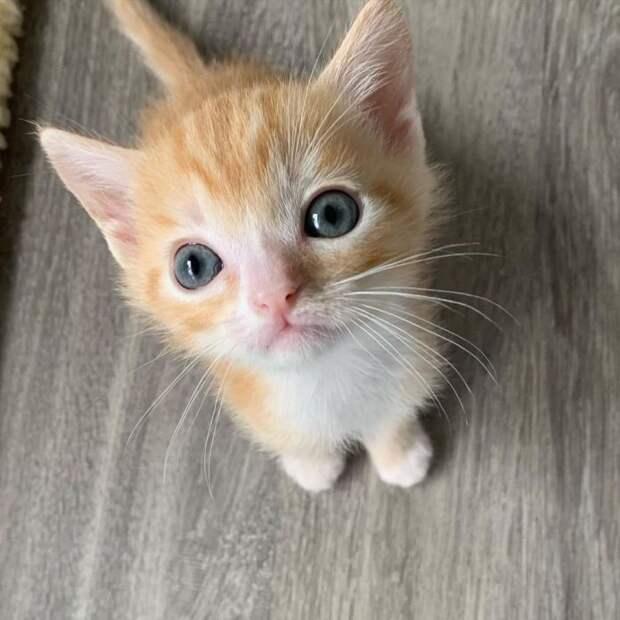 Кошка найдена сразу с двумя выводками котят, а сейчас её мечта сбывается