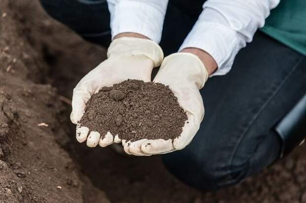 Еще не поздно заготовить грунт для выращивания рассады весной