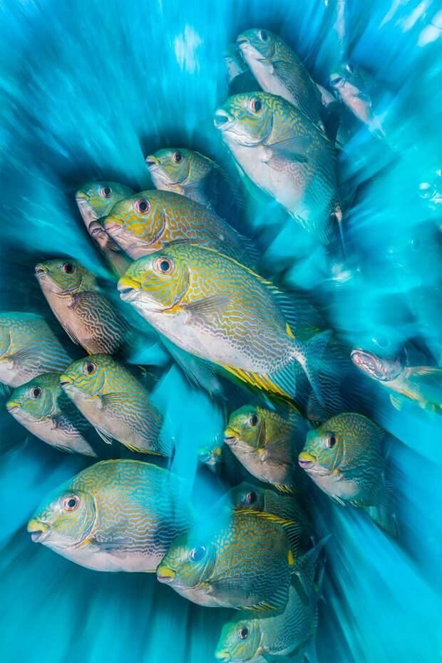 Полное погружение: лучшие фотографии подводного мира 2020