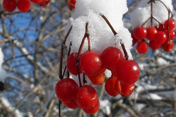 Акценты в саду: веточки, кроны, плоды
