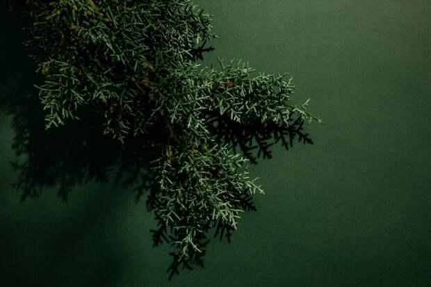Ароматы с нотами кедра: звезды древесных запахов