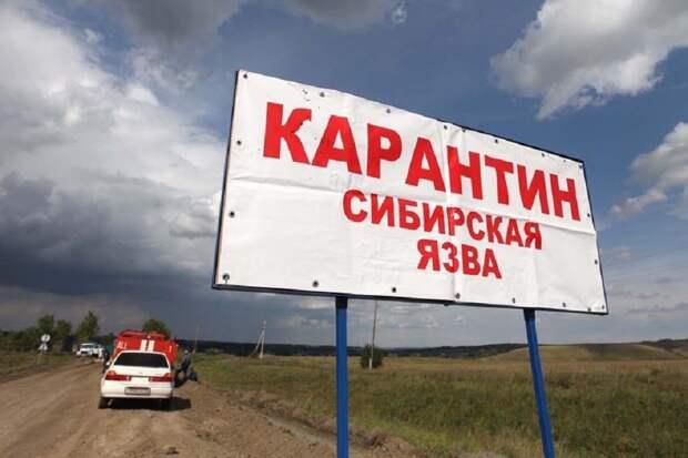 В Туве выявлен случай сибирской язвы