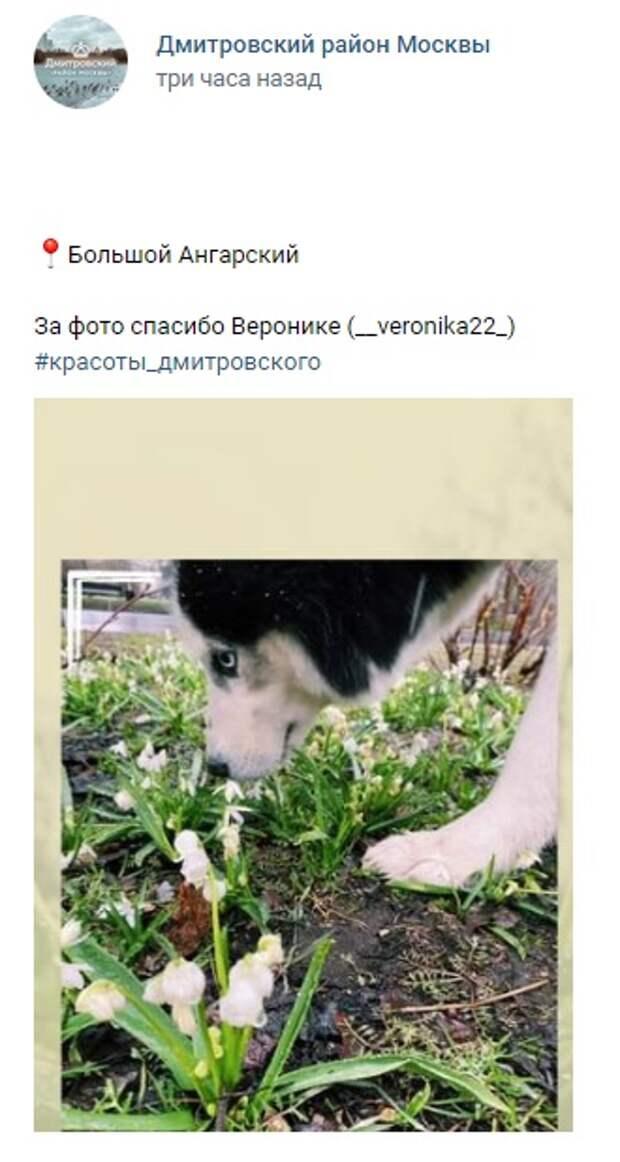 Фото дня: пес наслаждается весной на Ангарских прудах