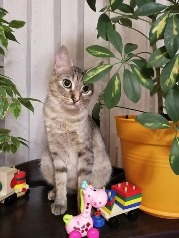 Девушка привезла кота в больницу и увидела там кошку. Она еще не знала, что вскоре эта МУРлыка переедет к ней…