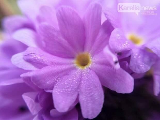 Местами до +32°С и грозы: прогноз погоды в Карелии на 19 мая