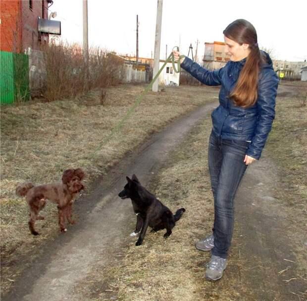 девушка с собаками
