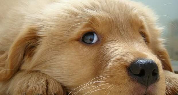Каким видят наш мир собаки