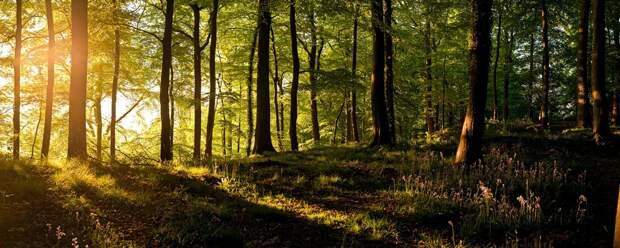 Деревья любят