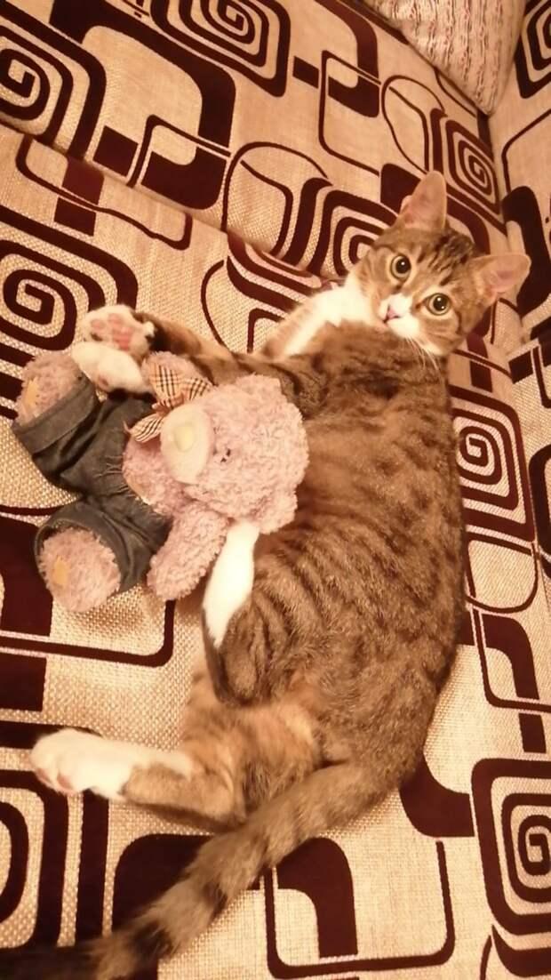 «Сиротка в дом — счастье в нем!» Девушка приютила котенка и заметила, что ей стало во всем везти