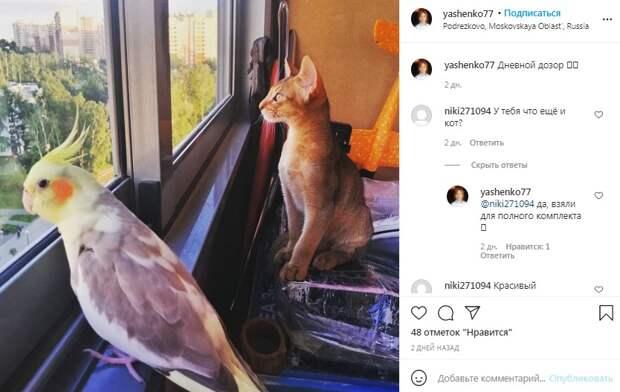 Фото дня: кошаче-пернатый дозор поселился в Подрезкове