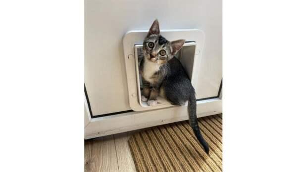 Котики и песики