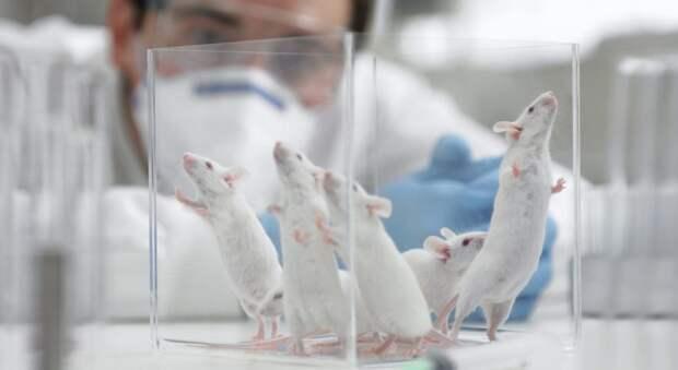 Ученые утверждают, что бактерии изнашего кишечника помогают нам думать