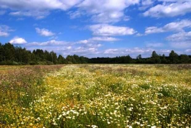 Эксперты заявили о подорожании земельных участков под строительство