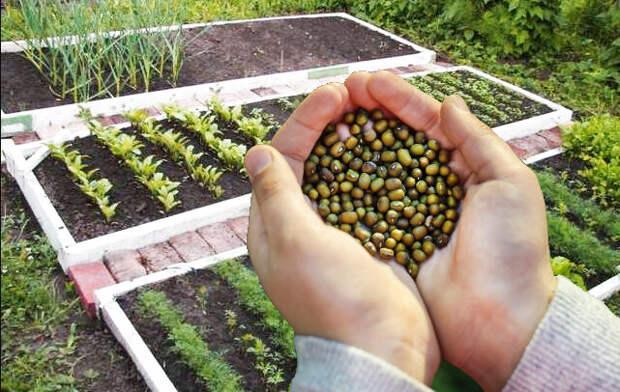 Какие удобрения нужно заделывать в почву весной и почему