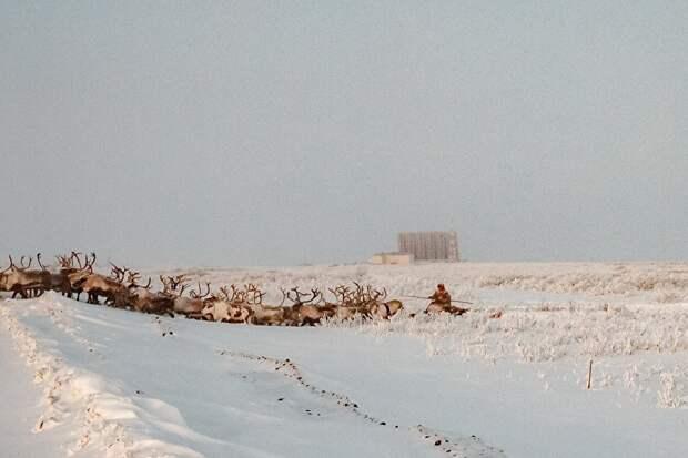 """На краю Воргашора военные строят мощную радиолокационную станцию «Воронеж М», которая, как боятся жители поселка, превратит территорию возле их домов в """"большую микроволновку"""". Пока же недалеко от станции перегоняют оленей."""