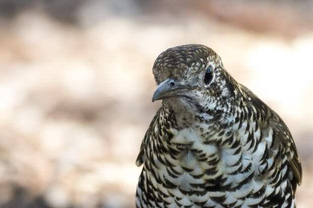 12 самых диких фактов о птицах