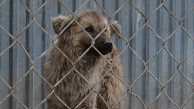Половина собак уральского приюта под Екатеринбургом задохнулась при пожаре
