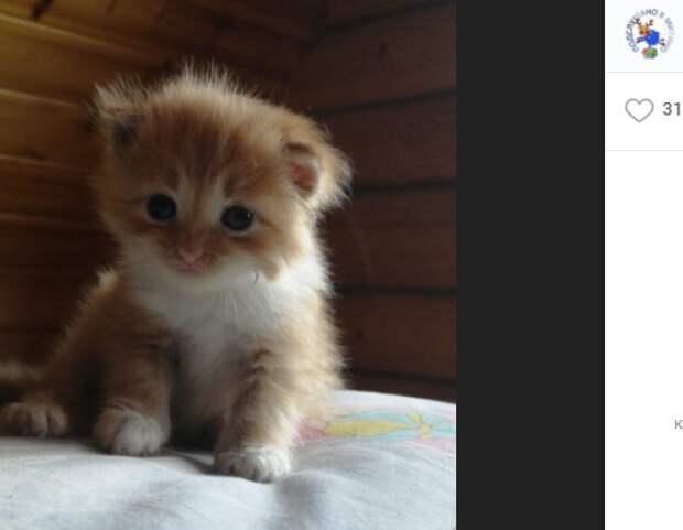 Брошенный котёнок нашёл в Митине дом благодаря соцсетям