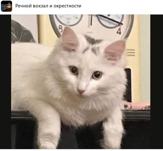 Кошка с Флотской сутки играла с хозяевами в прятки