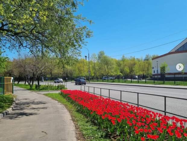 Фото дня: ковёр из тюльпанов на Заповедной