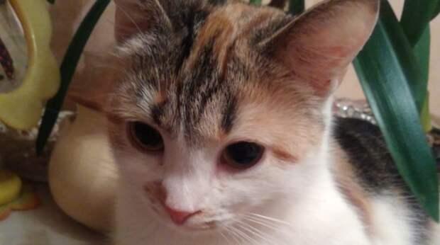 Из-под машины выскочила перепуганная кошка и бросилась к незнакомой девушке на руки
