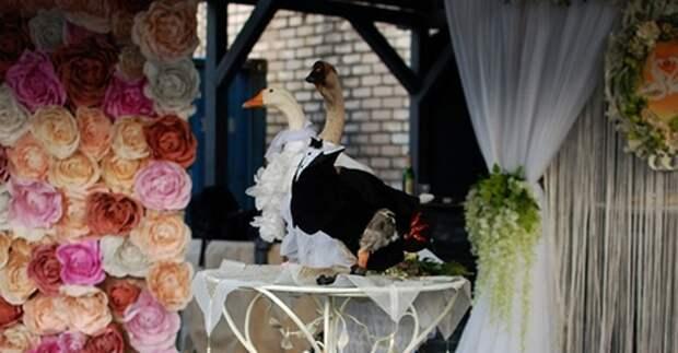 В Минске поженили гусей, несмотря на запрет властей