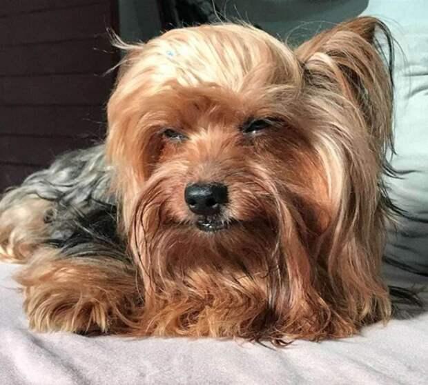 Парикмахер решила сама подстричь своего пса. Но он не в восторге, и его чёлка-провал говорит сама за себя