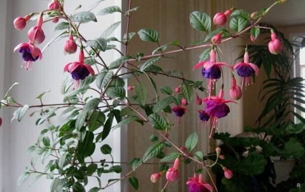 Астрологи рассказали, что у каждого знака Зодиака есть свое растение, приносящее удачу