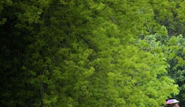Территория парка «Москворецкий» освобождена от самостроя