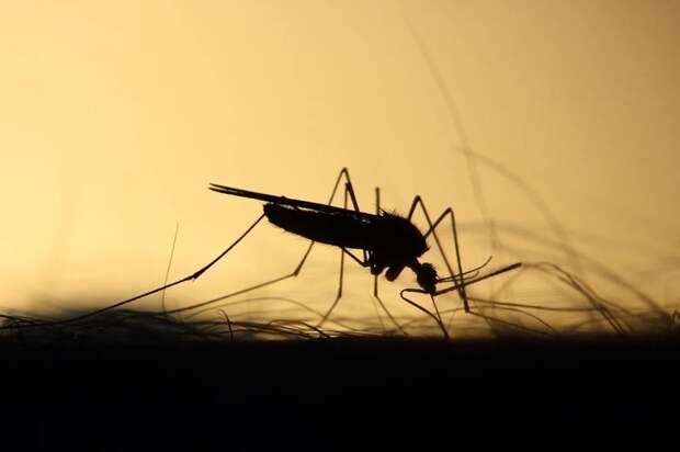 Биолог МГУ пояснил, как комары выбирают жертву для укуса