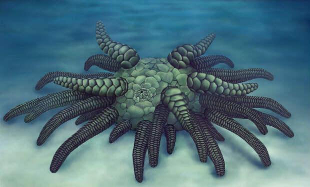 Ученые нашли существо, которое может быть Кракеном из легенд