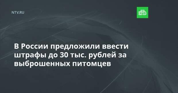 В России предложили ввести штрафы до 30 тыс. рублей за выброшенных питомцев