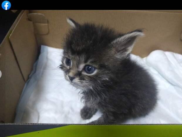 Ветеринар с Перервы спас котенка и нашел ему новый дом