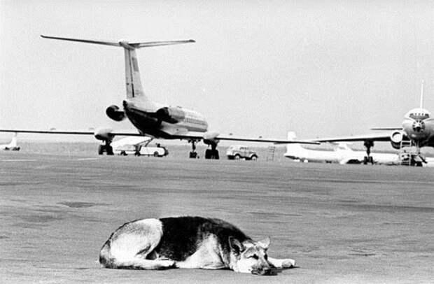 Два года ждала аэропорт, год, два, ждала, пальма, собака