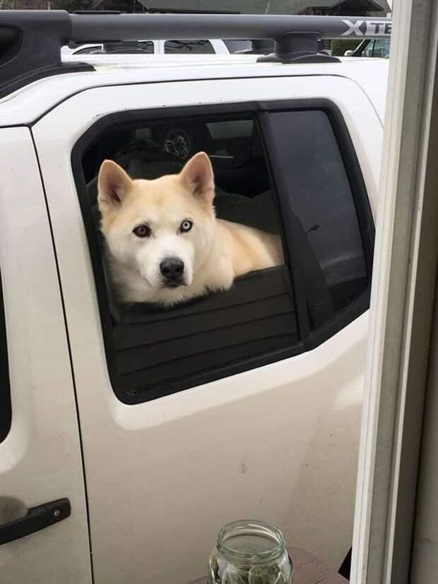 Сотрудница авто-закусочной любит собак, и нашла себе милое развлечение добрые дела, добрые люди, животные, забавно, история, собака, собаки