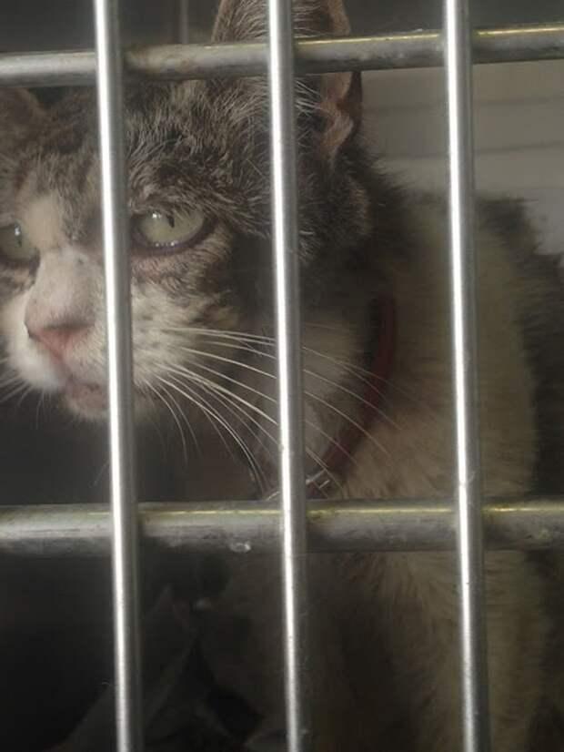 Кошка за решеткой
