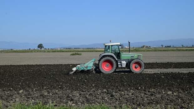 Почти 500 тысяч тонн зерна собрали на полях Удмуртии