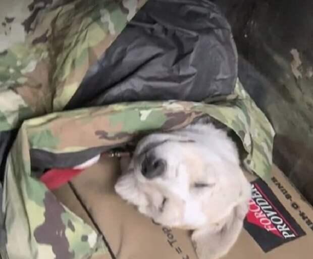 Солдат, служащий в Афганистане, привязался к бездомному щенку, но забрать его в США не может по банальной причине