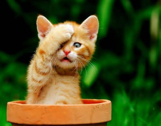 Фантастически смешные кошки! Подборка приколов с котами, кошками и котятами