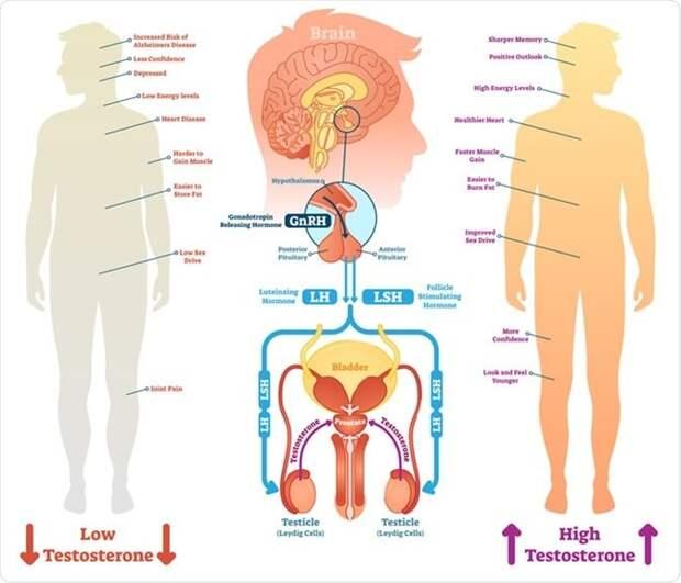 Гормональный дисбаланс: что нужно знать мужчинам