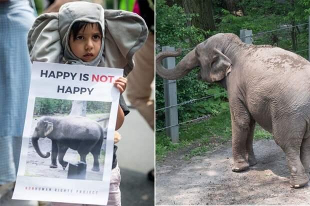 Суд США рассмотрит первый в истории иск слонихи против зоопарка