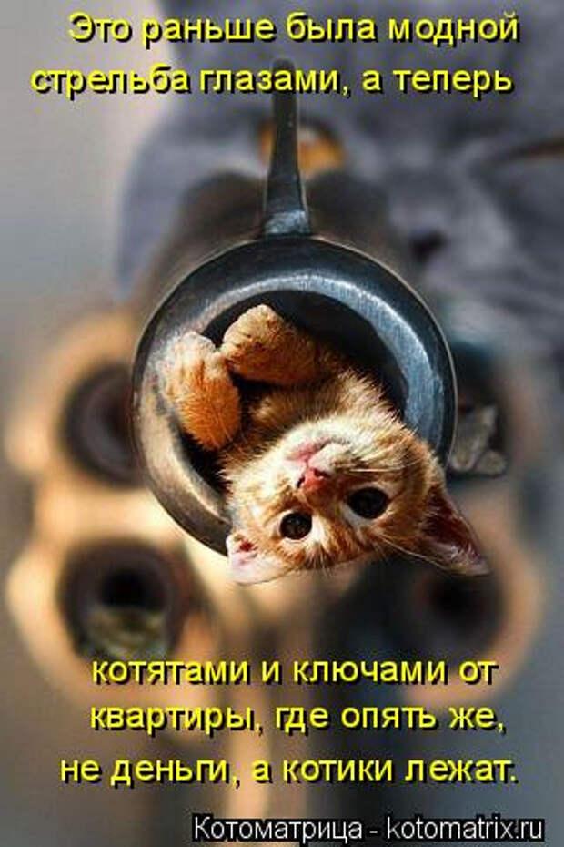 kotomatritsa_O (320x480, 146Kb)