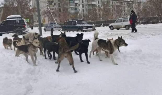 Стая собак кружит вокруг школы №6 вТаганроге