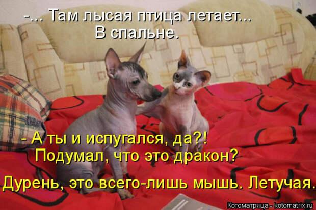 kotomatritsa_k (2) (700x466, 373Kb)